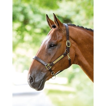 Leather Headcollar with Nameplate